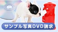 サンプル写真DVD資料請求